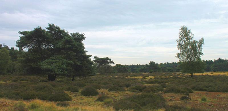 Natuurbegraafplaats Ommen